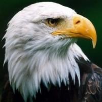 Eagle2010